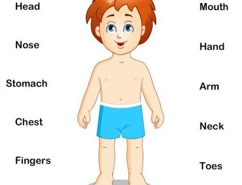 Kosa – Kata Bahasa Inggris Tentang Bagian-Bagian Tubuh (Parts of Body)