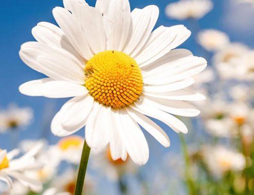Kosa – Kata Bahasa Inggris Tentang Bunga