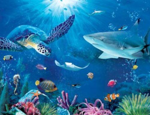 Kosakata Bahasa Inggris Tentang Hewan Laut